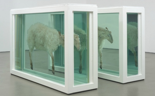 Lot 17. Damien Hirst (b. 1965) Away From the Flock (Divided)  glass, painted steel, silicone, acrylic, plastic cable ties, stainless steel, sheep and formaldehyde solution Two parts each: 46½ x 73 1/8 x 20in. (118 x 186 x 51.3cm.)  Executed in 1995  Estimate: £1,800,000 - £2,500,000 ($2,817,000 - $3,912,500)